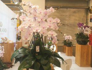 Trends 2020 IPM Blumen