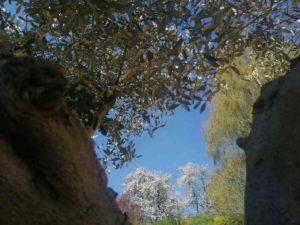 Herbstimpressionen Haslinger