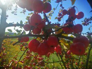 Herbstimpression Haslinger
